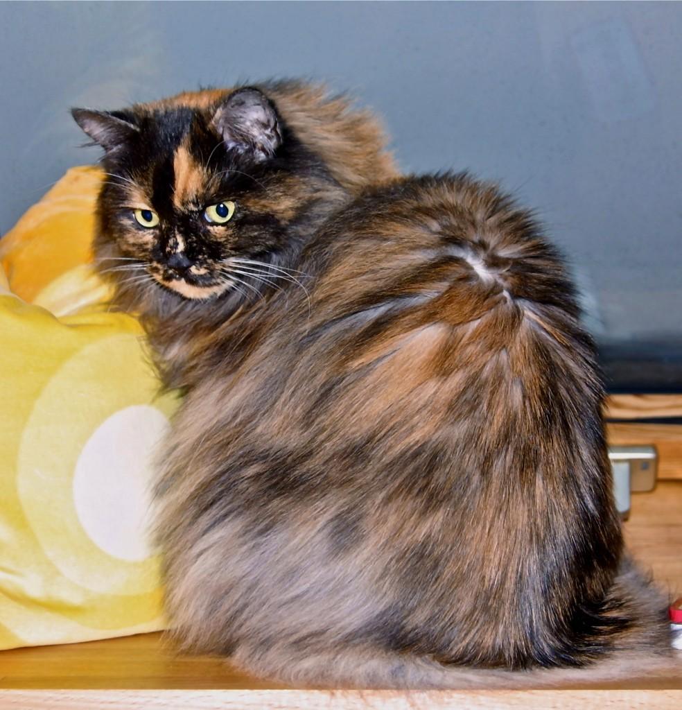 Ginger, 14 Jahre † 2012