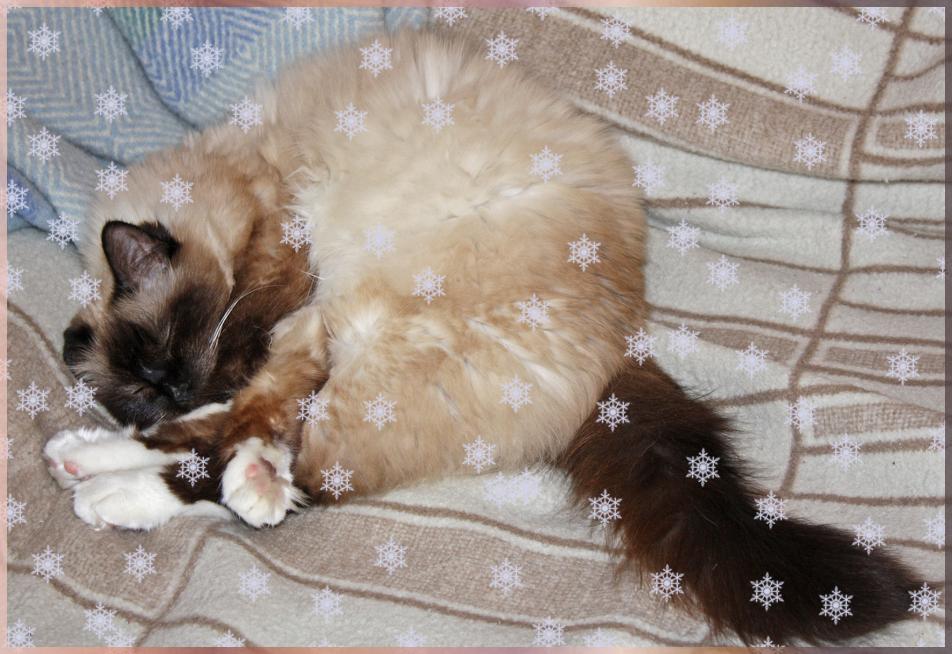 ZZZzzzzzz! Weckt mich, wenn der Winter weg ist!