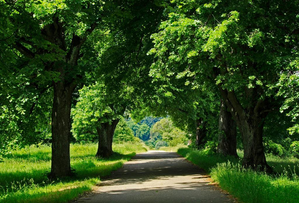 Lindenallee, der Baum hat mit seinen runden, einhüllenden Formen etwas Beschutzendes.