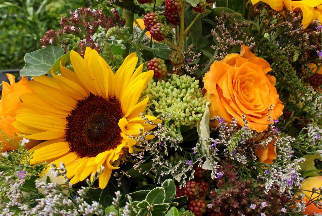 Die Sonnenblume bewahrt etwas vom sommerlichen Glanz.