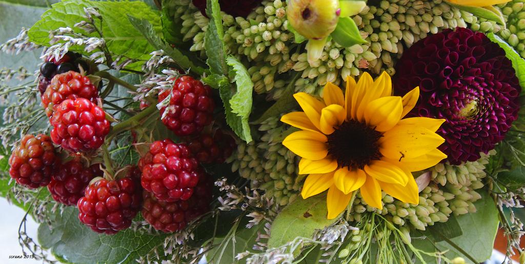 Sonnenblumen: Gesicht des Lugh,.