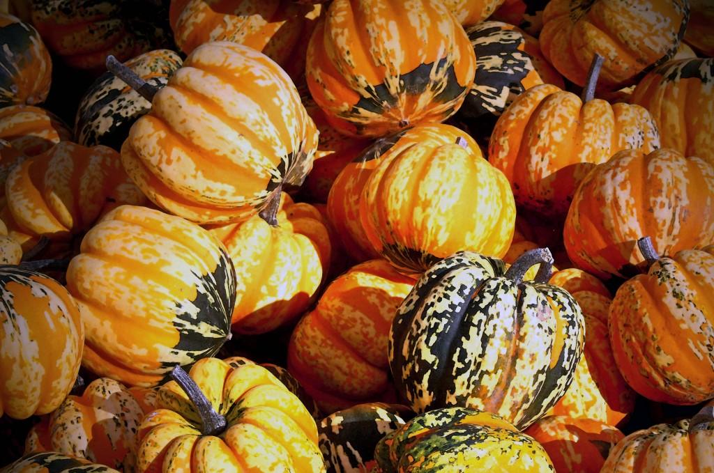 Kürbis-Vielfalt: Die bunten Früchte stammen aus Amerika.