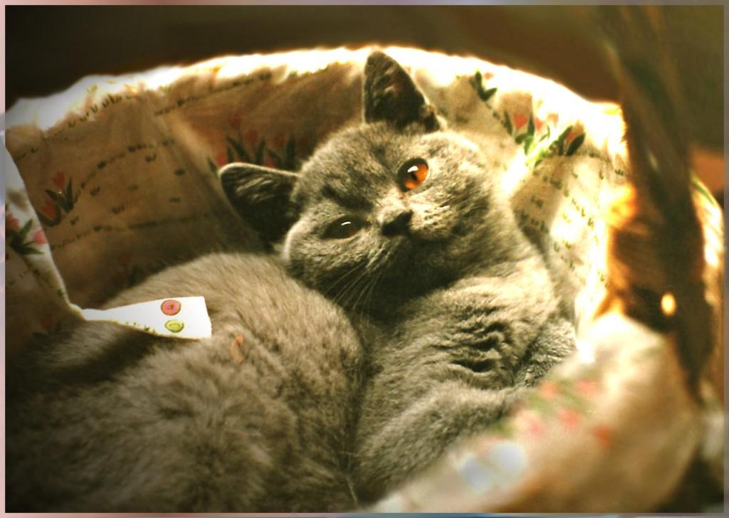 Ich bin kein Osterkater …!Obelix as Kitten ©beast666 1988