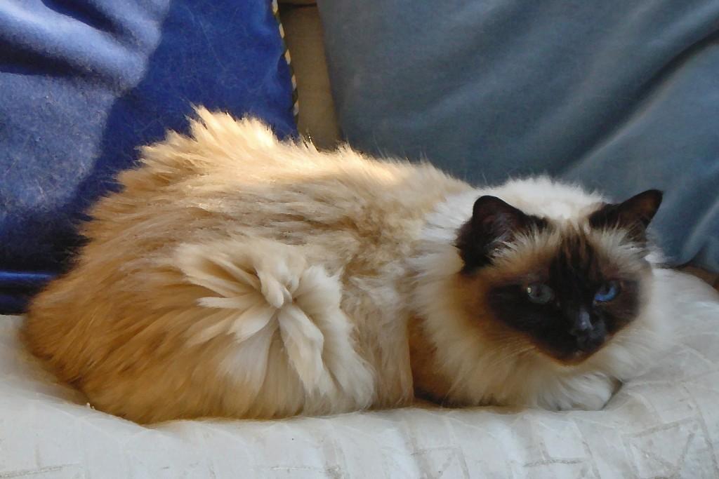 Veganes Katzenfütter ist Tierquälerei:Ich bin ein Raubtier und werde ohne tierisches Protein sehr krank!