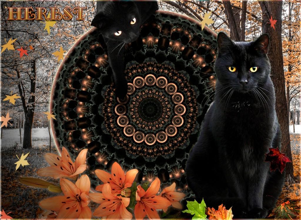 Der Herbst kommt mit Macht!A Tale of Two Kitties ©scrano 2015